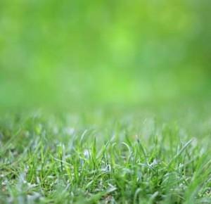 Ein schöner Rasen will gepflegt sein