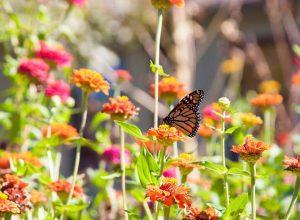 Ein schöner Garten im Frühjahr