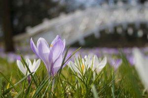 Im Frühjahr gibt es im Garten einiges zu tun
