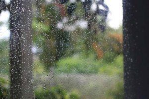 Das Regenwasser kann man im Garten nutzen